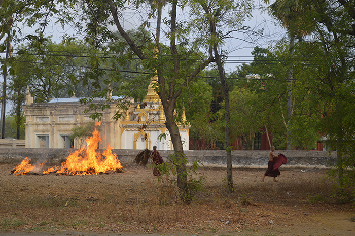 moines-birman